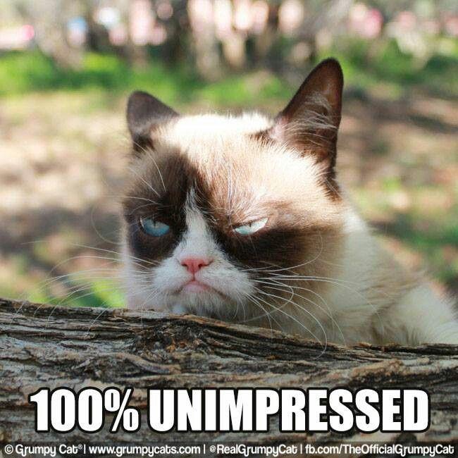 987779a3fd4474241bd482158acc3cb9--grumpy-cat-meme-grumpy-kitty